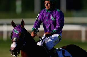 california chrome no sure thing as he takes to the turf